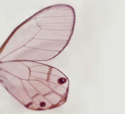 TINY WING galerie 0